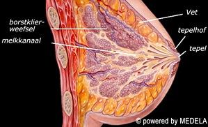anatomie1.jpg