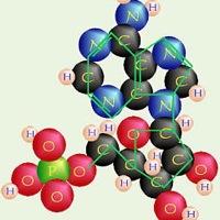 nucleo4.jpg