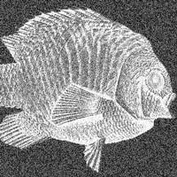 nwsbrcht-vis.jpg